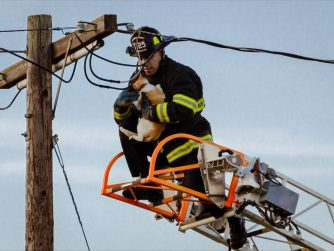 fireman rescues cat from telephone pole